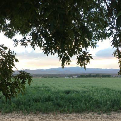 The Snake Ranch Farm through a gap in the trees