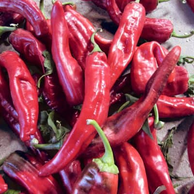 Red chiles scatterd on a table at a Snake Ranch Farm store