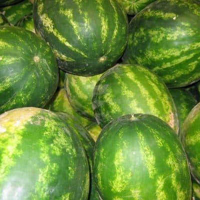 Watermelons grown at Snake Ranch Farm